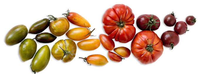 Tomatoes Divider Image