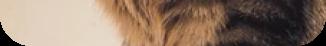 Kiki Profile Picture Bottom Part