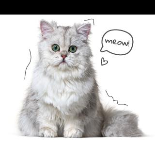 Grey Fluffy Cat